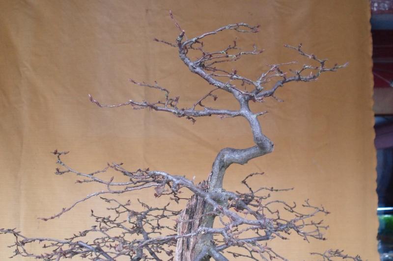 Traitement Bois Pourri traitement de champignons brionne dans l eure le havre normandie