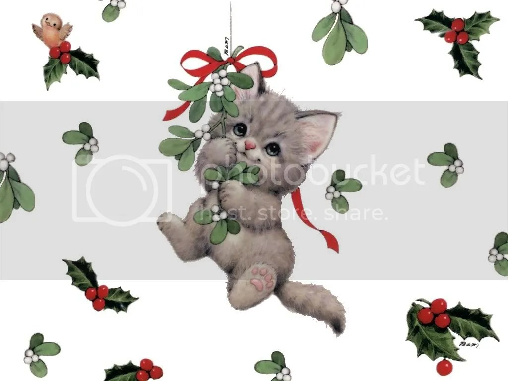 https://i0.wp.com/i450.photobucket.com/albums/qq228/MorningGloryGirl67/christmas-cat.jpg