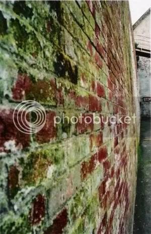 Mold on Bricks