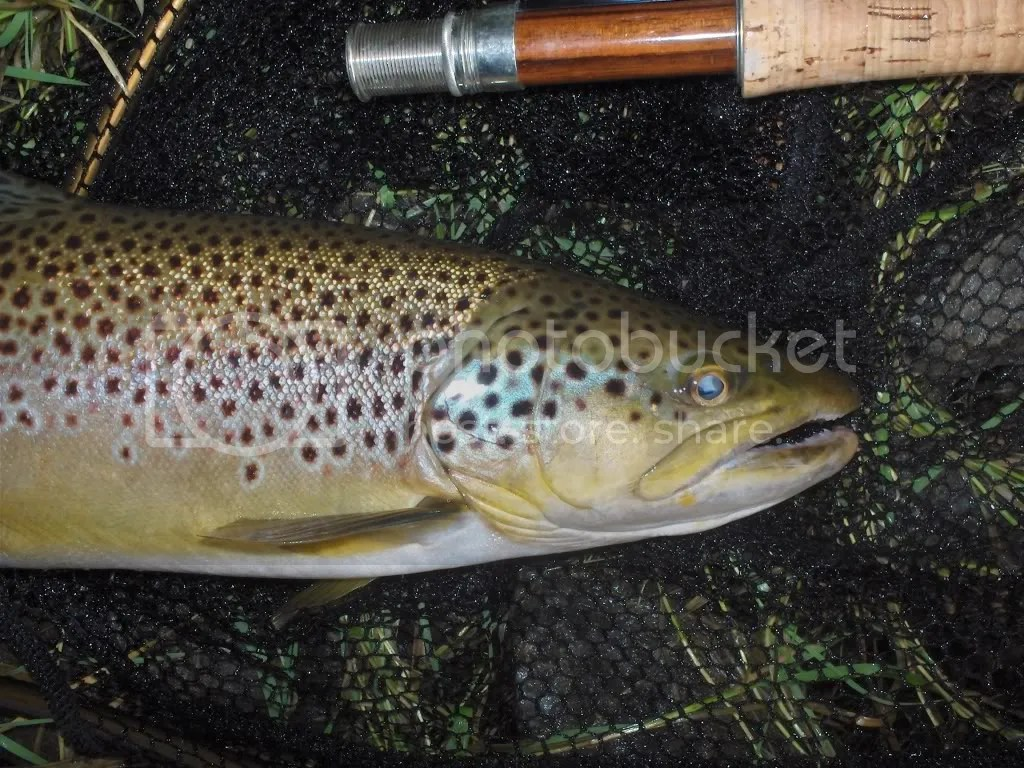 Brown on a dry from a shallow slough