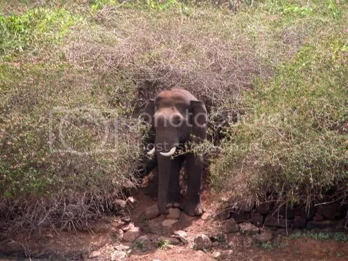 Mystery trails trek: M M hills - Naagamale - Palar (1/6)