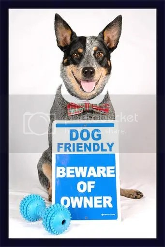 Dog Friendly Beware of Owner