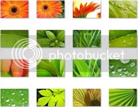 hình nền hoa và lá, leaves and flowers wallpapers