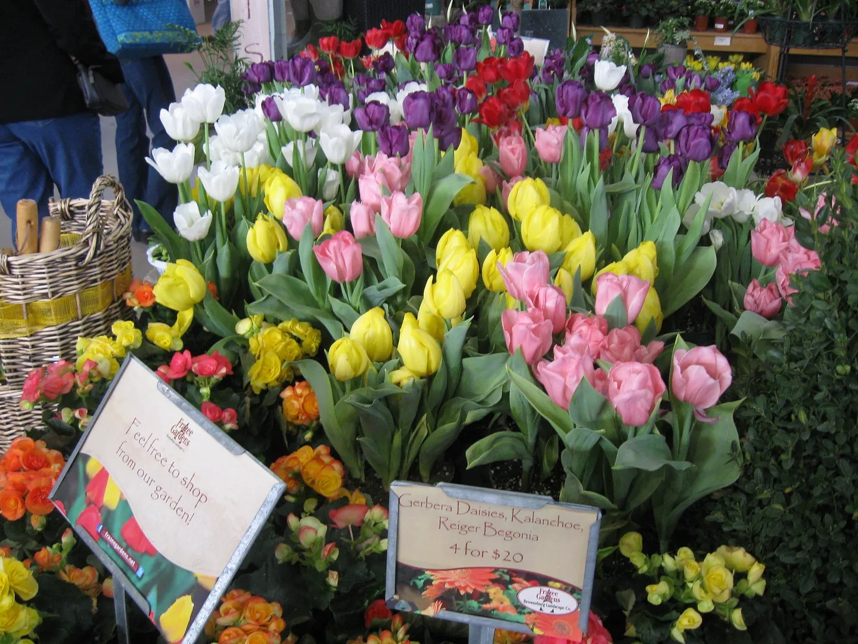 Indiana tulips