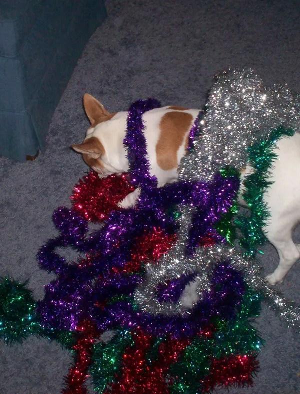 Lucky, Christmas garland