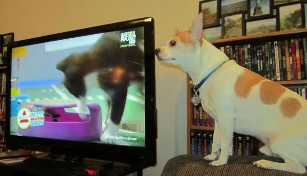 Lucky, Puppy Bowl IX viewer