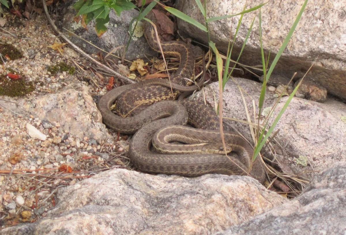 Colorado snakes