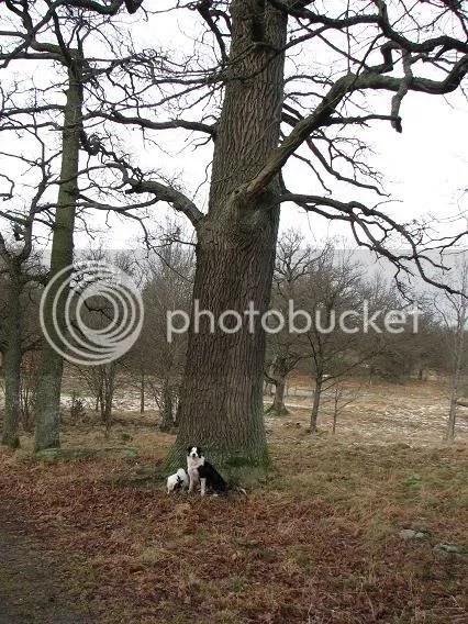 Stora träd eller små hundar??