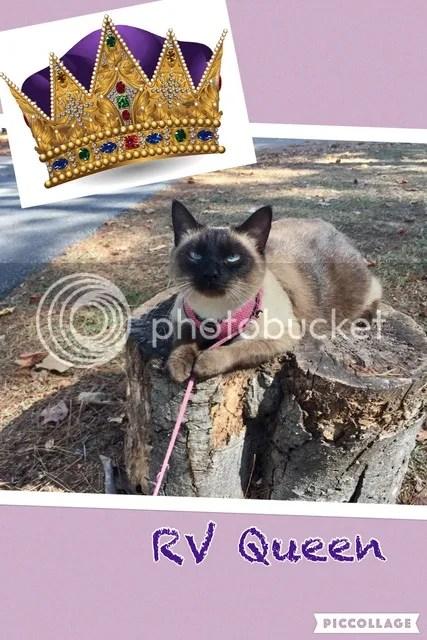 photo Robins cat queen_zpsz7fyawlc.jpg