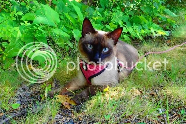photo Cat_zpsvv1zdz5x.jpg