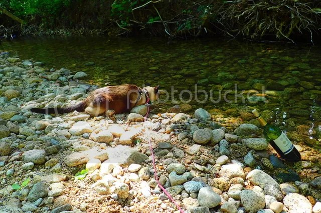 photo Cat drinking creek_zpsre3vqpvo.jpg