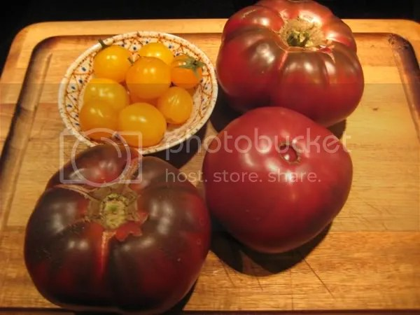 Black Krim and Gold Nuggets