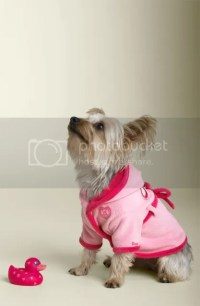 Puppy: Juicy Couture Pet Collection