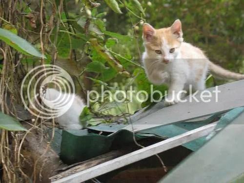 院子里闖入的小黃貓 | 思維游戲