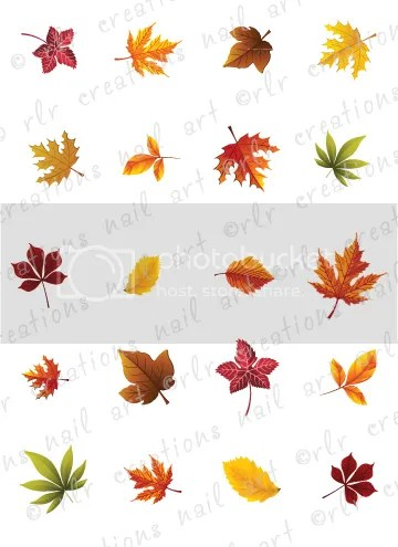 fall leaves assortment water