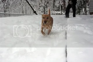 Gypsy in the snow!