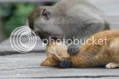monkey_n_cat.jpg picture by mudskippaz