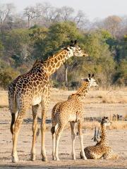 giraffeLisa2.130149.jpg