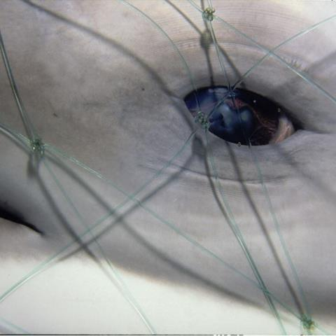 A dolphin in a net