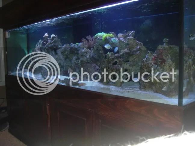 300 gallon aquarium for
