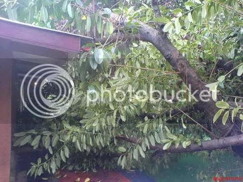 Pohon Runtuh 4