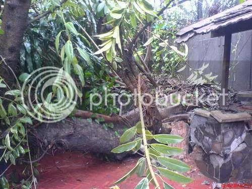 Pohon Runtuh 7