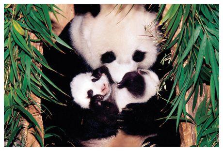 Mre Panda Et Son Bb Walmart Canada