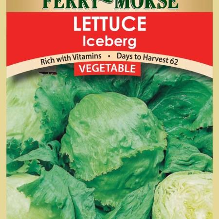 Vegetable seed Lettuce-Iceberg