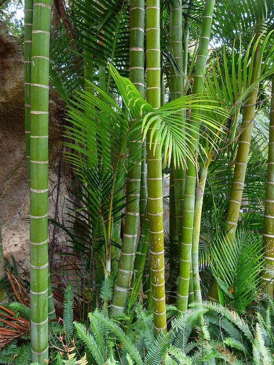 canvas print log bamboo
