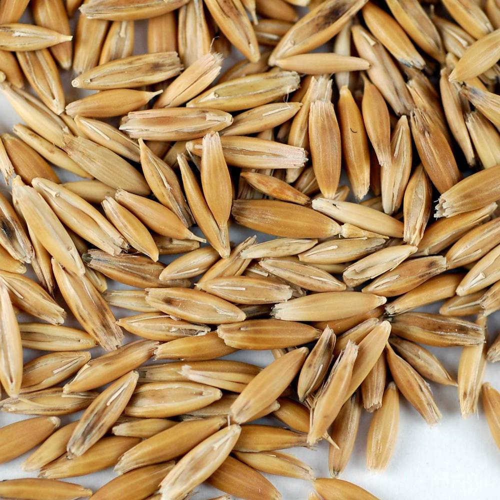 medium resolution of organic non gmo whole oat grain seeds with husk intact 3 5 lb re sealable can oats seed grains for sprouting oat grass animal feed storage more