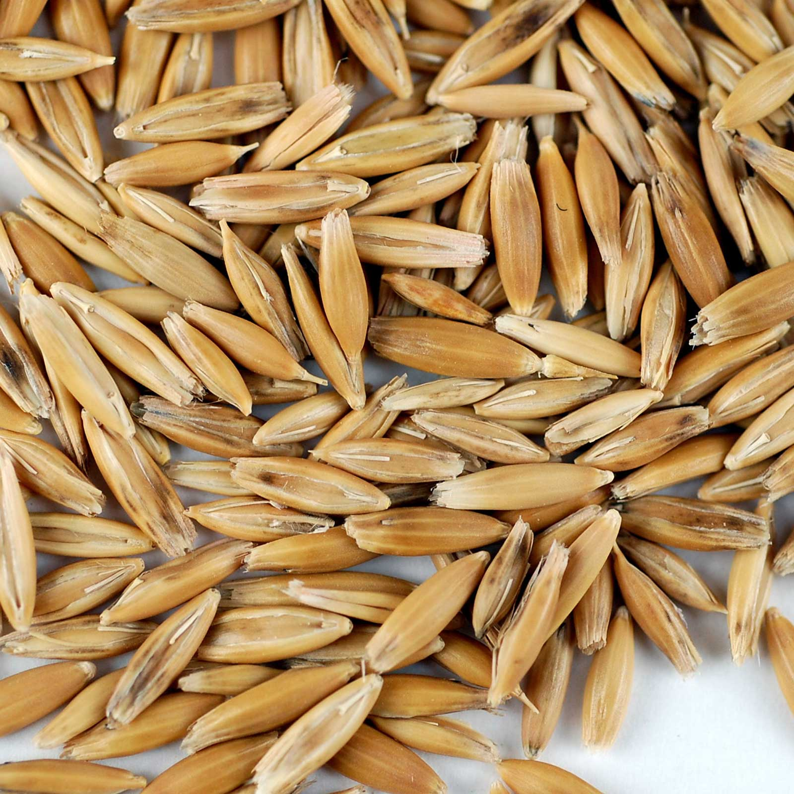 hight resolution of organic non gmo whole oat grain seeds with husk intact 3 5 lb re sealable can oats seed grains for sprouting oat grass animal feed storage more