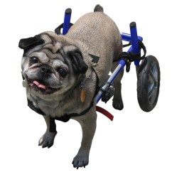 Wheelchair Dog Man For Small Dogs 18 25 Lbs Veterinarian Approved Walmart Com