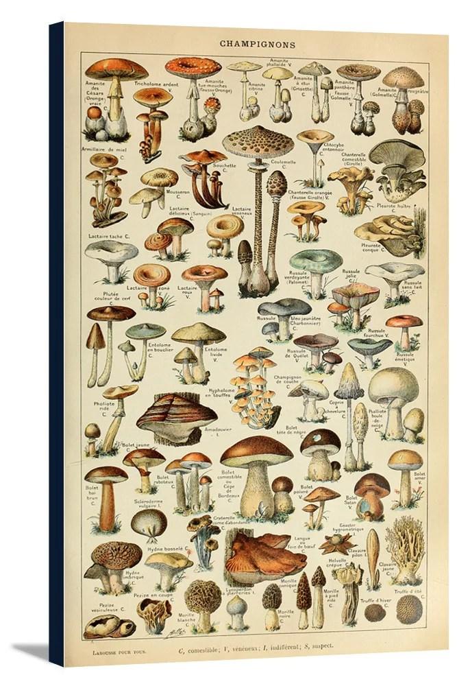 mushrooms c vintage bookplate