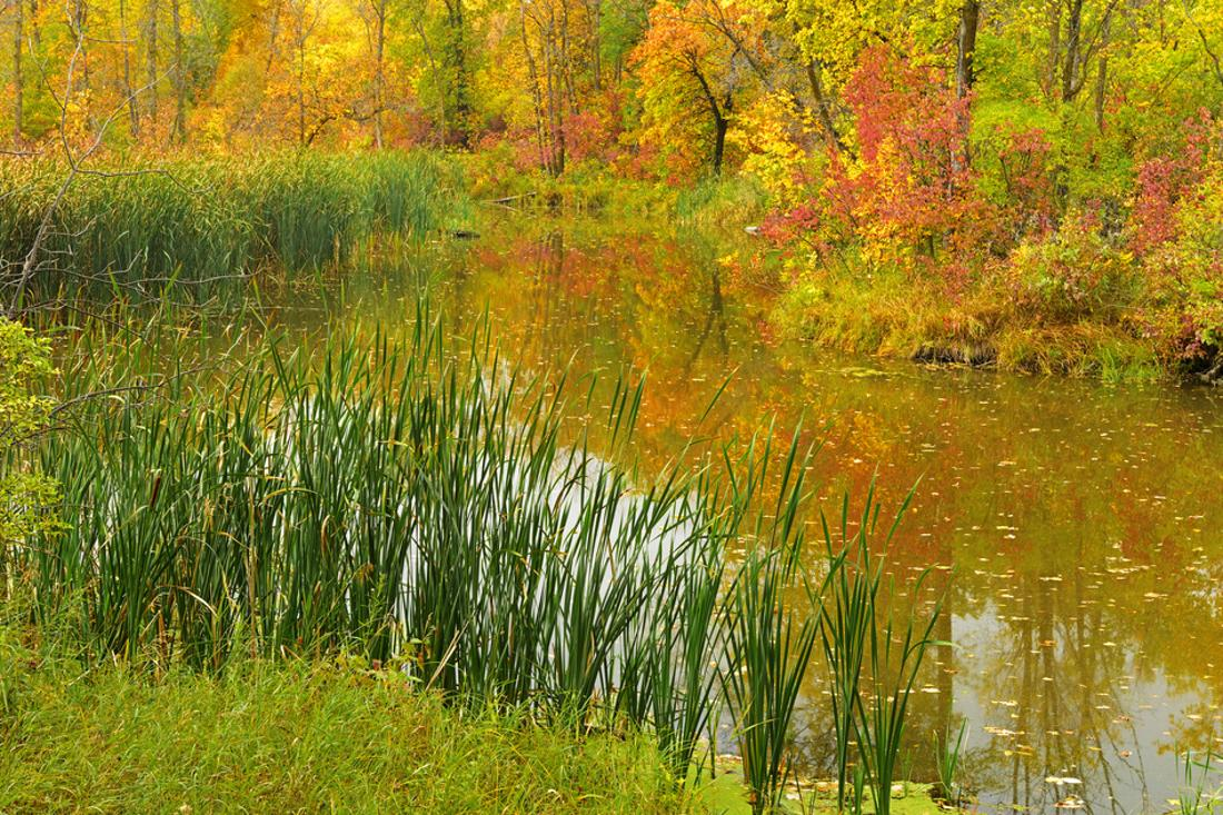 Canada Manitoba Winnipeg Autumn Colors And Pond In