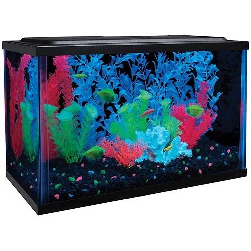 glofish 5 gallon aquarium