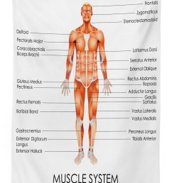 human anatomy outdoor tablecloth muscle system diagram of man body features biological elements medical heath image decorative washable fabric picnic  [ 1307 x 1754 Pixel ]
