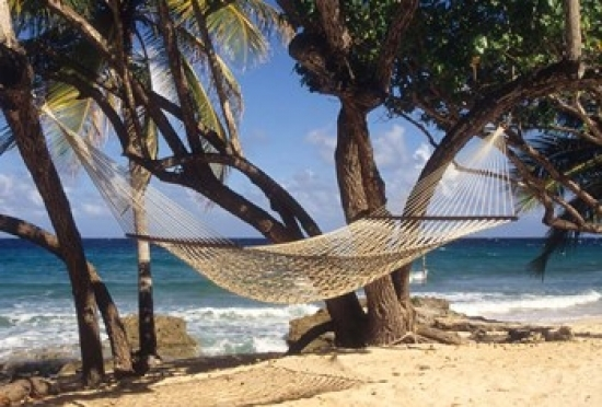 hammock tied between trees