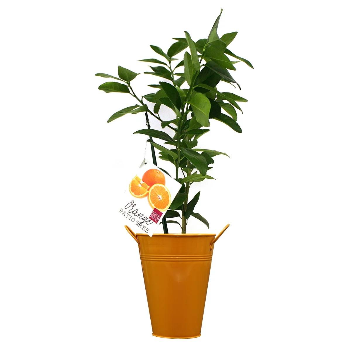 van zyverden orange navel citrus tree in decorative patio planter