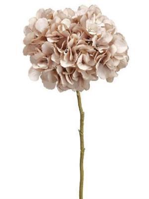 antique pink beige hydrangea