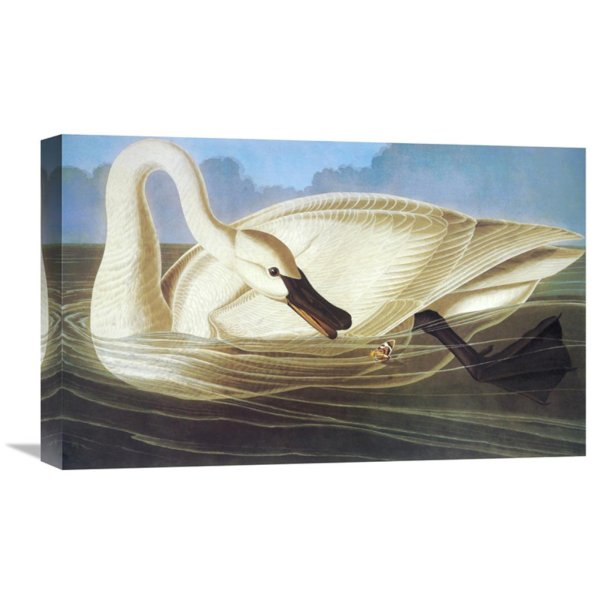 Global Trumpeter Swan Wall Art