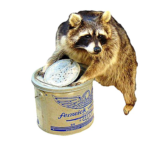 Raccoon In Minnow Bucket Professional Taxidermy Mounted Animal Statue Home Or Office Gift