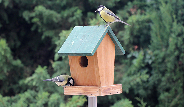 Bulk Bird Seed Dispenser