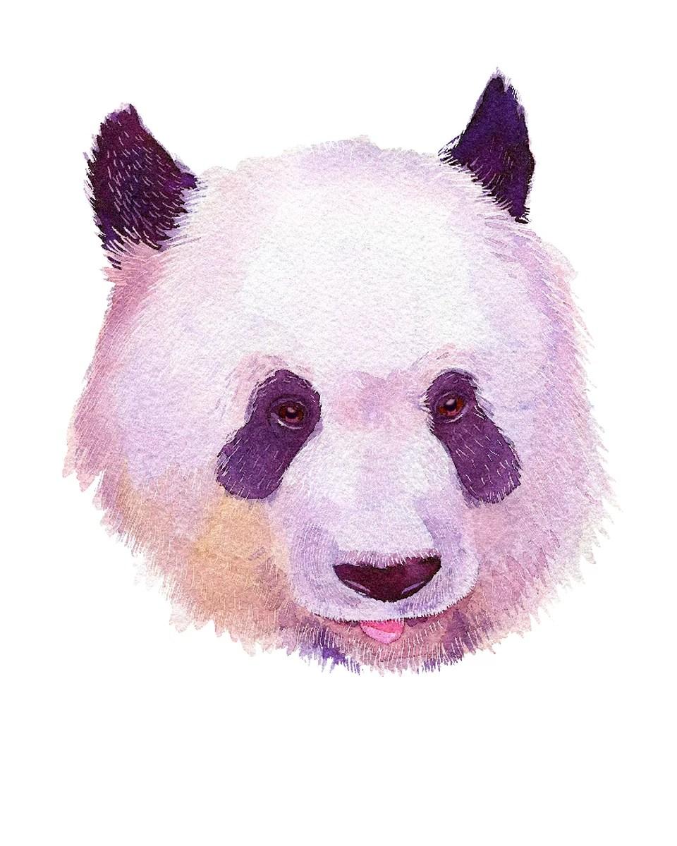 hight resolution of panda home wall shelf decor animal decorations watercolor prints walmart com