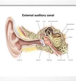 external auditory canal of human ear with labels framed print wall art walmart com [ 1100 x 852 Pixel ]