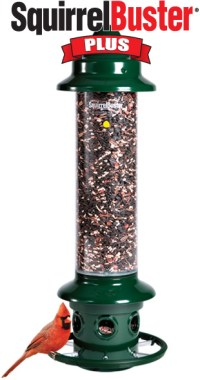 Brome Squirrel Buster Plus Cardinal Perch Ring Bird Feeder ...