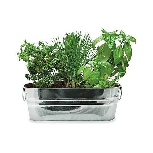 kitchen herb kit las vegas strip hotels with buzzy 94330 windowsill grow walmart com