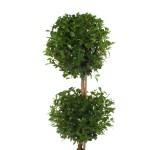 Costa Farms Eugenia Topiary 2 Ball 2 5qt Walmart Com Walmart Com