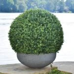 Lavenderarts Artificial Indoor Outdoor Boxwood Ball Faux Topiary Plant Ball Artificial Topiary Ball Wedding Party Home Outdoor 3pc 24inch Walmart Com Walmart Com