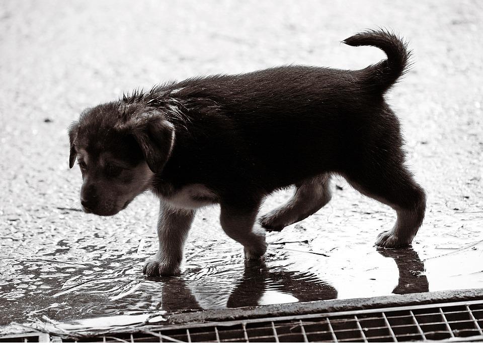 canvas print wet dog
