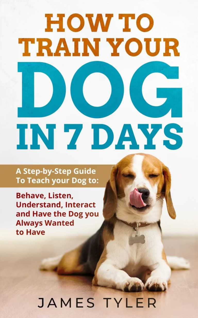Train A Dog To Behave